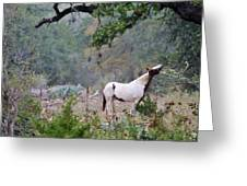 Horse 019 Greeting Card