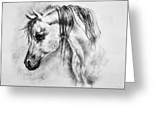 Arabian Horse 1 By Diana Van Greeting Card