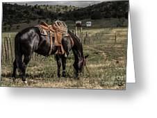 Horse 3 Greeting Card