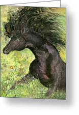 Horse - 7 Greeting Card
