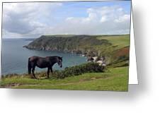 Horse Along Coastal Path Cornwall Greeting Card