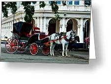 Horse And Buggy In Havana Greeting Card