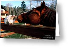 Horse And Cat Nuzzle Greeting Card