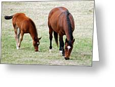 Horse And Colt Greeting Card