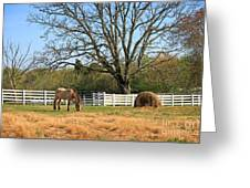Horse And Hay Greeting Card
