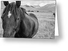 Horse And Sawtooth Mountains Greeting Card