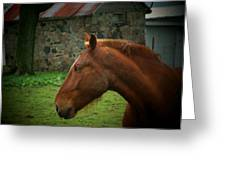 Horse And Shed Greeting Card