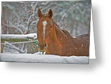 Horse And Snowflakes Greeting Card