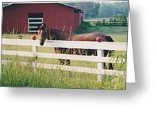 Horse And The Barn Greeting Card