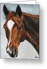 Horse Art Portrait Of Horse Maduro Greeting Card