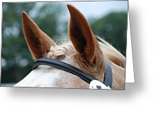 Horse At Attention Greeting Card