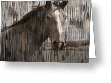 Horse At Home On The Range Greeting Card