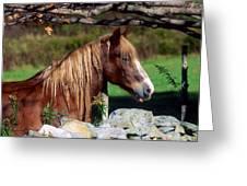 Horse At Stone Wall Greeting Card