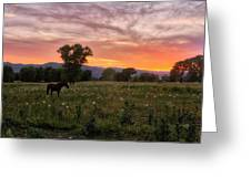 Horse At Sunset Greeting Card