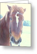 Horses Use Complex Facial Expressions Nearly Identical To Humans  Greeting Card by Hilde Widerberg