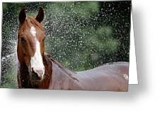 Horse Bath I Greeting Card