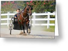 Horse Carriage Racing In Delmarva Greeting Card