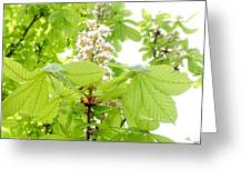 Horse Chestnuts Greeting Card