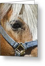 Horse Close Up Greeting Card