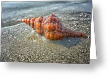 Horse Conch Greeting Card