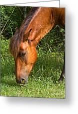 Horse Cuisine  Greeting Card