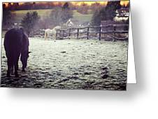 Horses On A Frosty Pasture Greeting Card