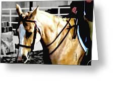 Horse Equus Ferus Caballus V2 Greeting Card