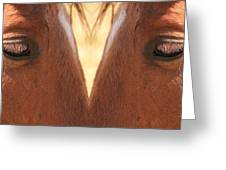 Horse Eyes Love Greeting Card