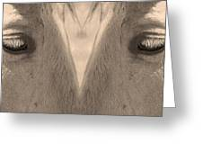 Horse Eyes Love Sepia Greeting Card