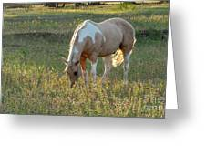 Horse Feeding In Grass Farm With Sunset Light From The Left Greeting Card
