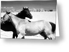Horse Friends Two  Greeting Card