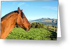 Horse Head Closeup Greeting Card