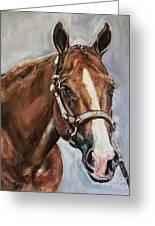 Horse Head Portrait Greeting Card