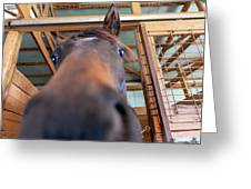 Horse Hello Greeting Card