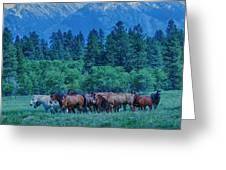 Horse Herd Greeting Card