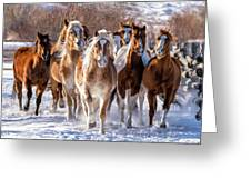 Horse Herd In Snow Greeting Card
