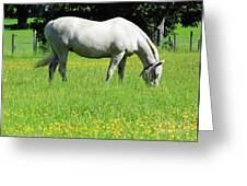 Horse In A Field Of Flowers Greeting Card