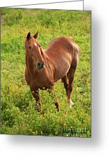 Horse In A Field With Flowers Greeting Card