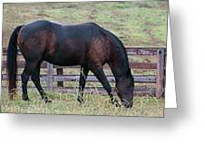 Horse In A Pasture Greeting Card