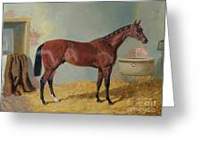 Horse In A Stable Greeting Card by John Frederick Herring Snr
