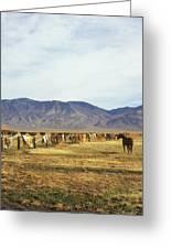 Horse In Eastern Sierras Greeting Card
