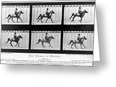Horse In Motion, 1878 Greeting Card