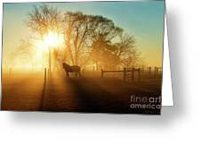Horse In The Fog At Dawn Greeting Card