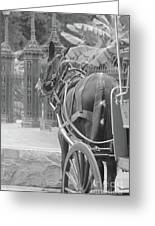 Horse In The Quarter Greeting Card