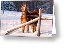 Horse In The Snow Greeting Card