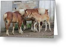 Horse Kiss Greeting Card