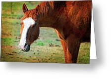 Horse Look Greeting Card