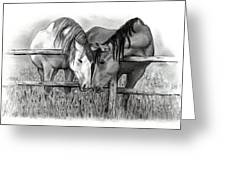 Horse Lovers Greeting Card