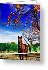 Horse Greeting Card by Niki Mastromonaco