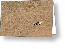 Horse On Canyon Floor Greeting Card